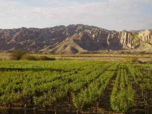 Landscapes and vineyards in Northern Argentina