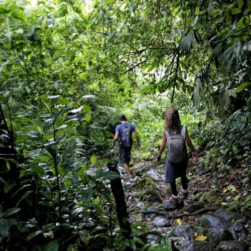 Jungle trekking, Carrasco National Park, Amazon, Bolivia