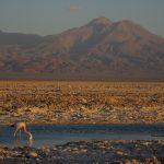 Panoramic view from Chaxa Lagoon, in the Atacama Salt Flat
