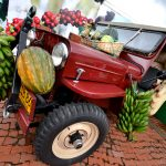 "The famous ""Willy""s Jeep"" an Icon of the Colombian Coffee region"