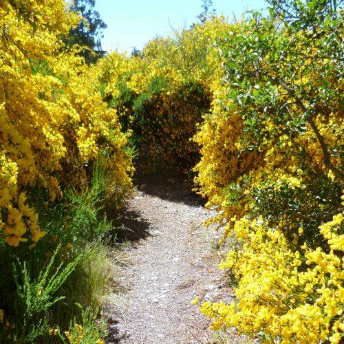 Trekking in Bariloche suroundings, Partagonia Argentina