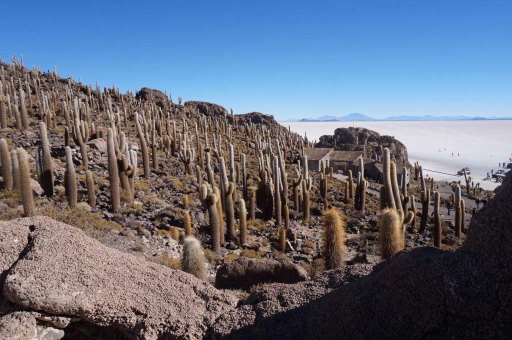 Cacti desert in the Huasco Island, Uyuni Salt Flat, Bolivia