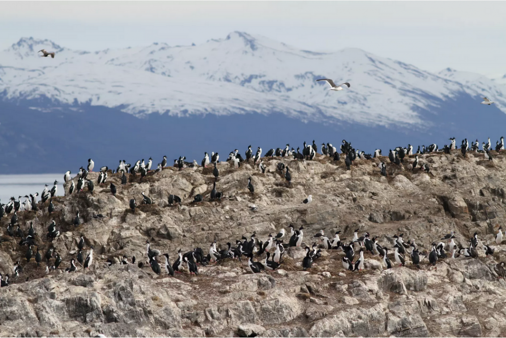 Penguins in Ushuaia, the End of the World. Photo credit: Nuno Torres