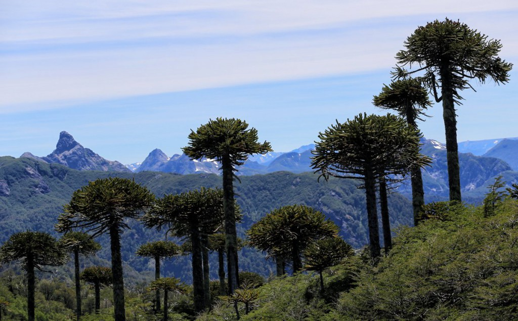 The Mapuche of the Forest - Indigenous Tourism in Chile