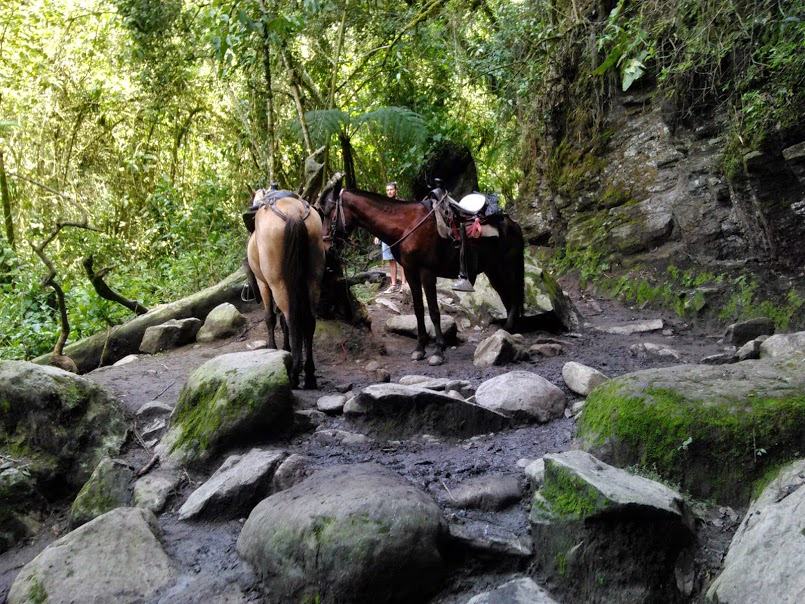 Horseback riding in Valle de la Cocora, Coffee Region