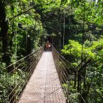 Having a stroll along the hanging bridges in the Monteverde National Park, Costa Rica