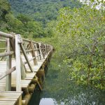 Cucalito path exploring the mangroves near Utria National Park, Colombia