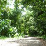 Going off the beaten path to Playa Hermosa community, near Uvita in Costa Rica
