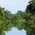 Lush forests surround you as you travel up the Rio Grande River in a protected area near Punta Gorda in Belize
