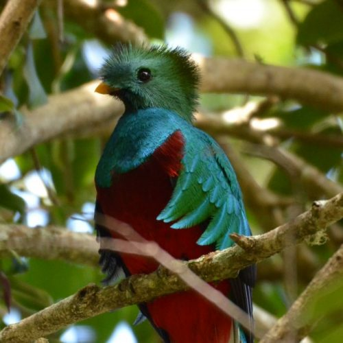 During a quetzal-watching excursion near Tami Lodge, in Dota, Costa Rica